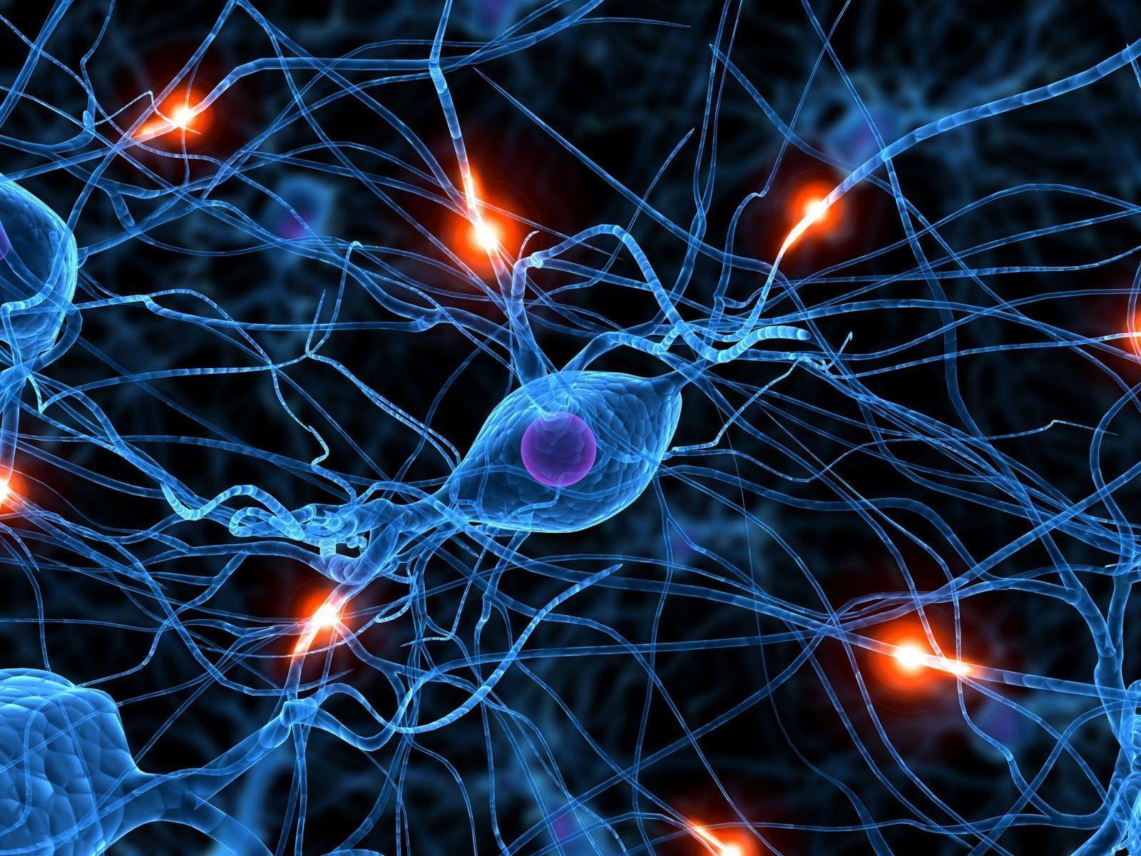 O QUE É NEUROLOGIA